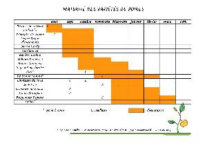 Calendrier des périodes de cueillette et de dégustation des poires
